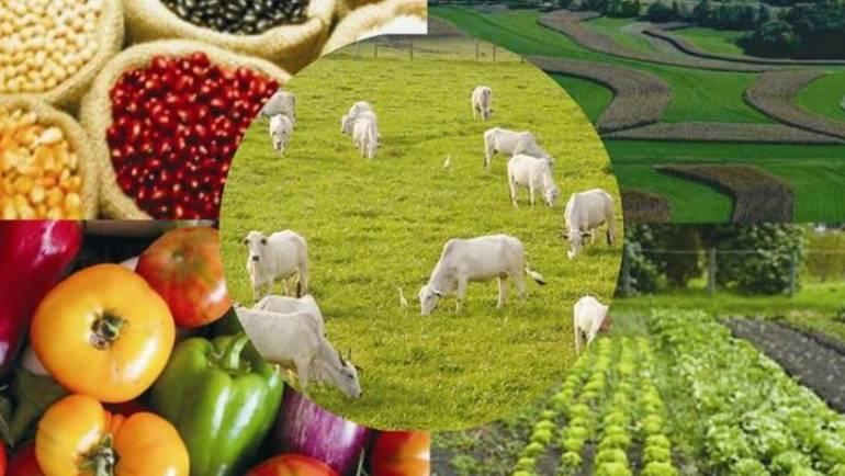 Vizită de bune practici în sectorul agro-alimentar, ecologic